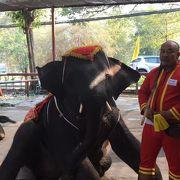 象に乗れます