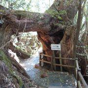 屋久島の自然を堪能することができました
