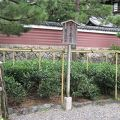 写真:平成の茶苑