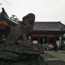 浅草神社と江戸時代の狛犬