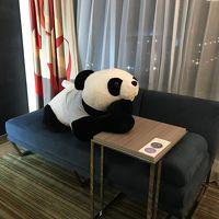 パンダのお出迎え