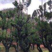 紅葉も北山杉も見事な園