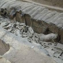 発掘された状態のままの子もいます。