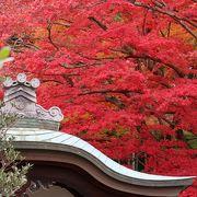 春の新緑もいいですが秋の紅葉も最高です!
