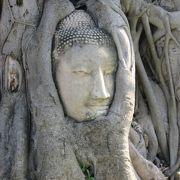菩提樹に包まれた・・・