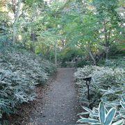 樹木に覆われた散策道