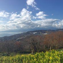 相模湾と、菜の花そして、天気が良ければ富士山も一望…