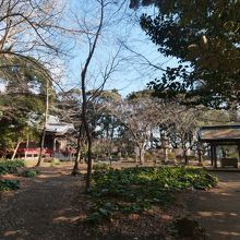 菜の花畑手前の吾妻神社。ここまで来ればすぐです。