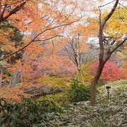 紅葉の綺麗な小道