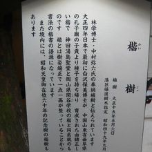 乃木神社にある楷の樹の解説板です。湯島の聖堂の楷樹と同系です
