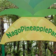 パイナップル農園