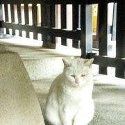 幸運の白猫なみちゃんにも会えました