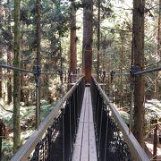 レッドウッドの木々の間の空中散歩