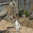 ときわ動物園