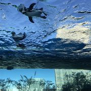 都会のビルの中の水族館