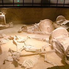 天子駕六博物館第二展示室車馬坑