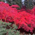 紅葉すごい