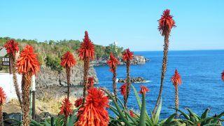 絶景を楽しめる海沿いの美術館、花も綺麗でした。