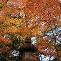 日本庭園の紅葉が綺麗でした