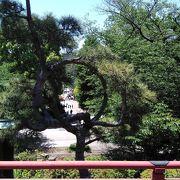 寛永寺清水観音堂の前にある月の松