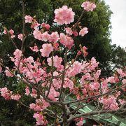 境内には梅や花が咲いていました。