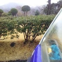 葉山 国際 カンツリー 倶楽部 天気