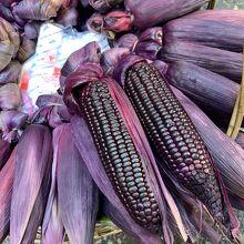 珍しい 紫の トウモロコシ