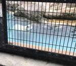 旭川市旭山動物園 ほっきょくぐま館