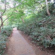 それほど急な道ではないですが、舗装された道ではないので、足元に注意して歩いていきました