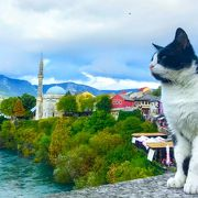 猫可愛い!