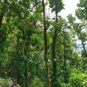 熱帯雨林のようなところを散策
