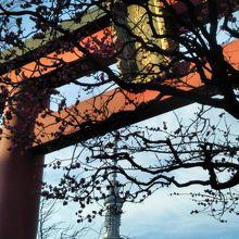 鳥居と梅と東京スカイツリー