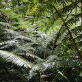 写真:熱帯雨林マノア滝ハイキング&グルメスーパーツアー