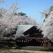 満開の桜で公園は華やかでした。
