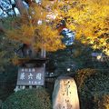 金沢城 兼六園ライトアップ 冬の段