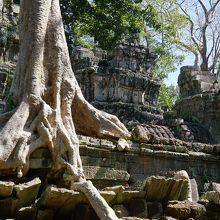 タ・プローム寺院