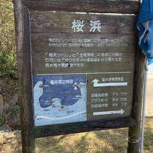 竜串海岸の遊歩道近く!