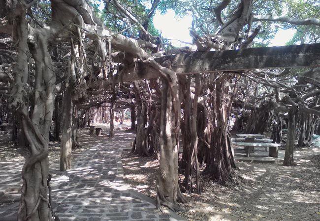 サイ ンガーム公園