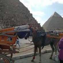 ピラミッドエリア内には観光客を乗せて見て廻る馬車もあります
