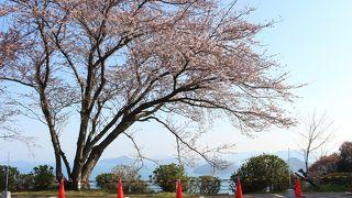 紫雲出山桜まつり