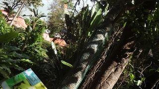 トロピカル スパイス ガーデン