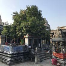 エーカンバラナータル寺院