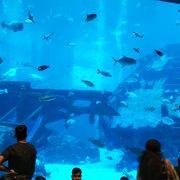 大水槽で游ぐ魚が美しかった