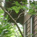 写真:三宅島自然ふれあいセンター アカコッコ館