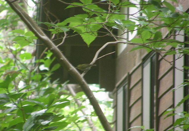 三宅島自然ふれあいセンター アカコッコ館