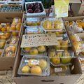 本州ではみないフルーツがある!