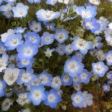 一つ一つは、こんなに小さなお花です。