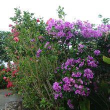 敷地内には南国の花や植物があふれていました。