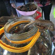 蛇やサソリのお酒を勧められる