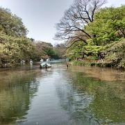 池の水面には、多くの桜の花びら